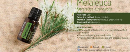 Uleiul esential de MELALEUCA (Tea Tree) doTERRA