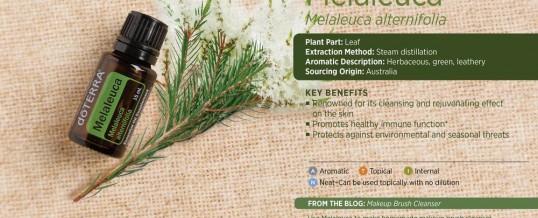 Uleiul esential de MELALEUCA (Tea Tree – Arborele de ceai) – de la doTERRA
