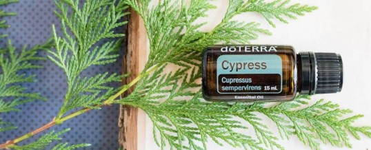 Uleiul esențial de CHIPAROS (Cypress) doTERRA