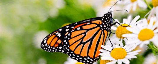 Parabola Fluturelui – despre necesitatea obstacolelor, a testelor în orice proces de creștere, de transformare